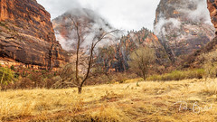 Beauty of Zion (pboolkah) Tags: utah unitedstatesofamerica springdale trees canon landscape canon5d zion canon5dmkiv rocks clouds zionnationalpark ngc
