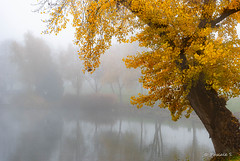 Matin brumeux (Pascale_seg) Tags: paysage landscape brume brouillard mist misty automne autumn autunno moselle lorraine grandest france nikon décembre matin morning tree arbre étang reflets riflessi reflections riverscape river