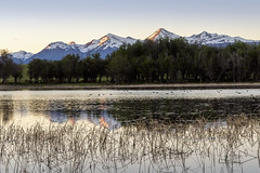 Sunset with water birds (tmeallen) Tags: sunset mountains snowcovered reflections water birds ripples lake grass clearsky travel remote carreteraaustral patagonia aysen coyhaique chile