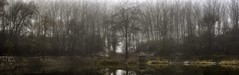 Silent trees (Gergő Kardos) Tags: reflection nopeople calm nature morning winter lakeside fog mist trees wood forest