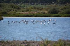 Salinas do Samouco (pcaldeira) Tags: portugal pcaldeira salt pans samouco birds sanctuary conservation flowers
