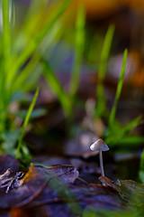 Tiny Fungi (ianbartlett) Tags: outdoor 365 landscapes fungi ponies trees reflections shadows light water streams waterfalls