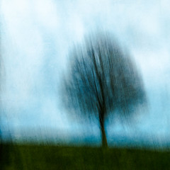 (Brigitte Aeberhard) Tags: painterly tree baum icm intentionalcameramovement blur