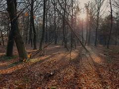 a sunny day with a bit of fog (herman hengelo) Tags: enschede vliegveldweg sunnyday fog autumn shadows
