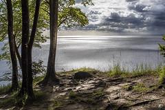 DSC_5583 (Vickie1709) Tags: sassnitz allemagne germany deutchland voyage travel urbanphtography nikonphotography nikond750 jasmundnationalpark rügen rugen rugenisland kreidefelsenrügen nature picoftheday pictureoftheday trek randonnée paysage landscape merbaltique balticsea