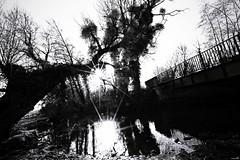 Le cadre campagnard aux portes de la ville (Un jour en France) Tags: canoneos6dmarkii canonef1635mmf28liiusm eos campagne nature rivière contrejour monochrome black blancetnoir blancetnoirfrance picardie oise leshautsdefrance pont arbre arbrepaysage soleil sun silhouette