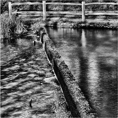 342.2 Falls (Dominic@Caterham) Tags: water lake path winter mono ducks