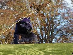 Panther at Donside Village, Seaton Park, Aberdeen (iainh124a) Tags: iainh124a scotland aberdeen uk sony sonycybershot dschx95 dschs95 cybershot dx95
