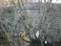 Brig o'Balgownie over River Don near Seaton Park, Aberdeen (iainh124a) Tags: iainh124a scotland aberdeen uk sony sonycybershot dschx95 dschs95 cybershot dx95