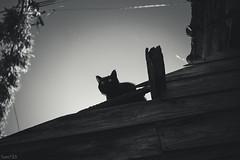 猫 (fumi*23) Tags: ilce7rm3 sony sel35f18f emount 35mm fe35mmf18 feline a7r3 animal alley cat chat gato neko bw blackandwhite monochrome モノクロ ねこ 猫 ソニー street 路地