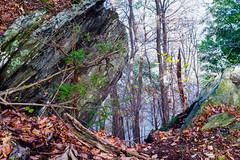K1AD5997 (B. Gohacki) Tags: yashinon5cmf2 pentax k1 ricoh dslr fullframe vintage glass landscape rural auto lens yashica woods forest rock pennsylvania stone