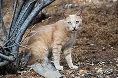 Chat de Sliema (uluqui) Tags: cat sliema chat animal malte malta vacance holiday wander wanderlust light fuji fujifilm xt20 xtrans