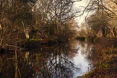 Basingstoke Canal Claycart-Eelmoor 8 December 2019 005 (paul_appleyard) Tags: basingstoke canal farnborough aldershot hampshire hants december 2019