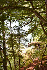sBs_1907(vac2)_0075-2 (schoolartBYschoolboy) Tags: auvergne puydedome lake forest vulcan