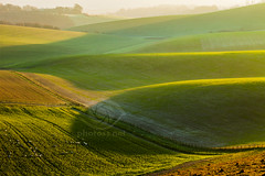 Time of the Season (S l a w e k) Tags: southdowns uk nationalpark winter countryside landscape