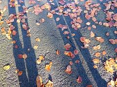 Friendly shadows (penelopephotoshop) Tags: alexandrapark manchester uk shadows shadowplay leaves ground concrete urban urbanlandscape urbanenvironment england