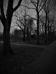 Which path to take? (penelopephotoshop) Tags: alexandrapark manchester uk blackwhite photography trees nature park parkland walkway path england winter urbanenvironment urban urbanlandscape leafless deciduous ground leaves