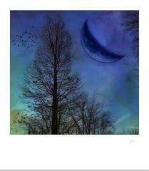 Blue moon. (jeanne.marie.) Tags: blue trees winter sky moon cold birds flying colorful december flight silhouettes treescape polaroid aqua purple turquoise indigo myneighborhood mydailywalk crescent