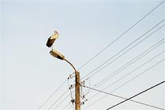 2D (Piotr Skiba) Tags: kodakproimage100 stork wires sky summer podlasie poland pl piotrskiba film eos