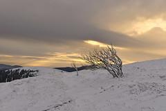 L'or du Hohneck (Thierry.Vaye) Tags: vosges arbres sommet hohneck neige balade paul