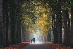 Cycling Lesson (Christos Zoumides) Tags: outdoors nature autumn morning sunrise fog atmosphere treelane mist leaves yellow orange atmospheric mood cyclist mother daughter road landscape tranquil trees lush foliage beautyinnature netherlands mastbos breda nikond750 ngc