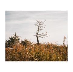 #0262 (Masami H.) Tags: 6x7 film analog mediumformat pentax67 kodakportra160 landscape