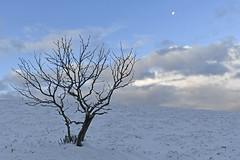 Le bleu du Hohneck (Thierry.Vaye) Tags: vosges arbres sommet hohneck neige balade paul