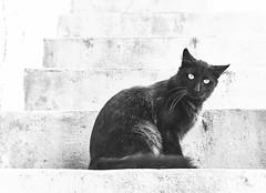 gato-acopladi (RayPluton) Tags: cat cats gato gatos nature animales animals pet pets mascotas