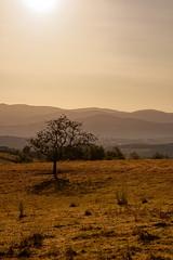 Un matin ensoleillé en Auvergne (Glc PHOTOs) Tags: glc6263dxo glcphotos nikon d850 fx full frame 45mpixel tamron sp 90mm f28 di macro 11 vc usd tamronsp90mmf28dimacro11vcusd f017 sunrise lever du jour paysage landscape auvergne courpiere