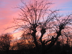 Winter evening sky (*SHERWOOD*) Tags: france vendée larochesuryon home garden