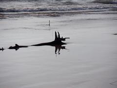 Sunday Morning Lakeside 2 (jadedirishgryphon) Tags: driftwood fantasycreature beach lakemichigan sheboygan wisconsin
