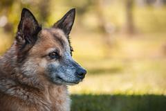 • Vulpish • (ᛚ ᚨ ᚢ ᚱ ᚨ) Tags: dog cane perro bokeh desenfoque colores colours green verde animal animals felinos nikon nature naturaleza vida life grey white gris blanco eyes eye ojos ojo d5000 d5k