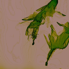 Schlumbergera Slide (Shastajak) Tags: schlumbergera schlumbergeratruncata notachristmascactus thanksgivingcactus novembercactus lightroomcc photoshopcc layers blending filters flower sliderssunday hss