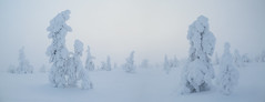 Ghost trees in the fog - Finland (Frédéric Lefebvre - Landscape photography) Tags: snow outdoors landscape nature tree no people winter forest cold temperature sky tranquil scene frozen beauty in ghost trees fog finland