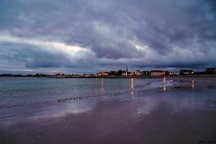 Sanderlings on the shore at dusk... île Tudy, Finistère, France. 2019/12/07. (joelgambrelle) Tags: ocean sea france dusk bretagne breizh shore sanderling britany finistère îletudy nikond500