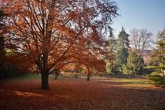 Remnants of autumn (Nige H (Thanks for 25m views)) Tags: nature landscape autumn autumncolour bath sydneygardens trees park