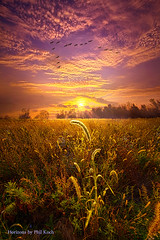 Have Faith in the Small Things Watermark (Phil~Koch) Tags: dramatic unity trending popular canon rural fineart arts shadow sunrise light peace wisconsin shadows endless earth sunlight horizon pastel sun frost blue journey soft artwork travel spiritual autumn seed backlight