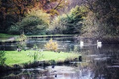 Sankey Valley Park, Warrington, England (mike wire) Tags: park canal water birds trees autumn nature
