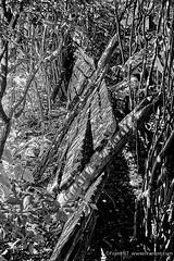 Broken Barricades (Frank NT) Tags: blackwhite bw contrast xf1855mmf284rlmois xt1 fujifilm fence