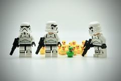LEGO Stormtrooper Duckling invasion