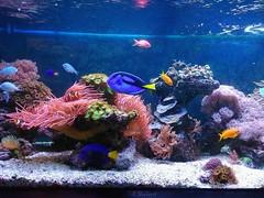 Colorful Aquarium (Solista*) Tags: ryba fish kolory colours colourful poland polska woda water animal animals zwierze zwierzak zwierzeta aquarium akwarium life light życie światło natura nature