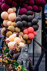 Flowers, Balloons, and a Lion (Brett of Binnshire) Tags: sculpture art plants belgium scenic eastflanders ghent streetscene locationrecorded gent balloons lion steps flowers leaves