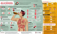 Infographic : How Alcohol Travels Through the Body (smallpocketlibrary) Tags: free book bookspdf pdf medicine psychology ebook booksmedicine nutrition cosmos universe science physics technology astronomy neurology surgery anatomy biology chemistry mathematics university infographic picture photography animal wildlife fitness insects amazing wonderful incredibility beauty awesome nature smallpocketlibrary