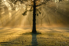 The Beauty of Light (Ellen van den Doel) Tags: zonsopkomst natuur netherlands nature mist boom outdoor fall light goeree zonsopgang zonnestralen tree sunrays middelharnis landscape beam fog herfst sunrise landschap overflakkee