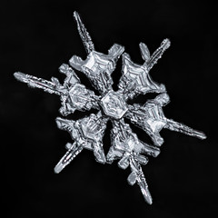 Snowflake 871 (Don Komarechka) Tags: snow flake snowflake ice crystal nature symmetry fractal science physics frozen water mineral mineralogy weather meteorology hydrology focusstacking lumix lumixstories lumixs1r s1r