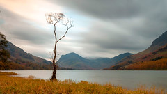 The Lonely Birch Tree (Coless66) Tags: beautiful lakedistrict lakes buttermere northwest thetree delicate sunset ƒleetwithpike rugged hills mountains views scenic longexposure le leefilters nikon z6 autumn memories holiday pines grass mind mindful love lonely clouds standing birch moody atmospheric lizcolesphotography cumbria cumbrianmountains graduation photography landscape