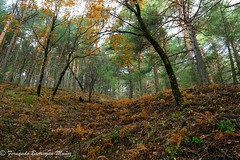Bosque (barragan1941) Tags: bosques forest trees arboles hojas lev fall outom otoño yellow orange