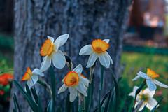 002 (1 of 1)-17 (daria_kochemasova) Tags: summer лето цветы flovers spring
