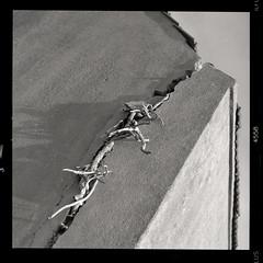 (Ir3nicus) Tags: ausen outdoor derelict verfallen wurzeln roots riss crack hauswand wall film analogue analog schwarzweis blackandwhite sw bw hasselblad500cm carlzeissplanar80mm128ct mediumformat 6x6 square 120 selbstentwickelt selfdeveloped ilfordhp5plus400 epsonv800 kodakhc110 filmisnotdead ishootfilm ilovefilm