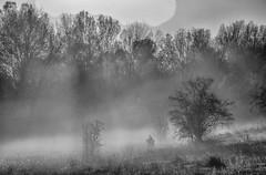Autumn fog (Peideluo) Tags: fog niebla otoño autumn landscape nature tree trees blackandwhite monocrome naturaleza